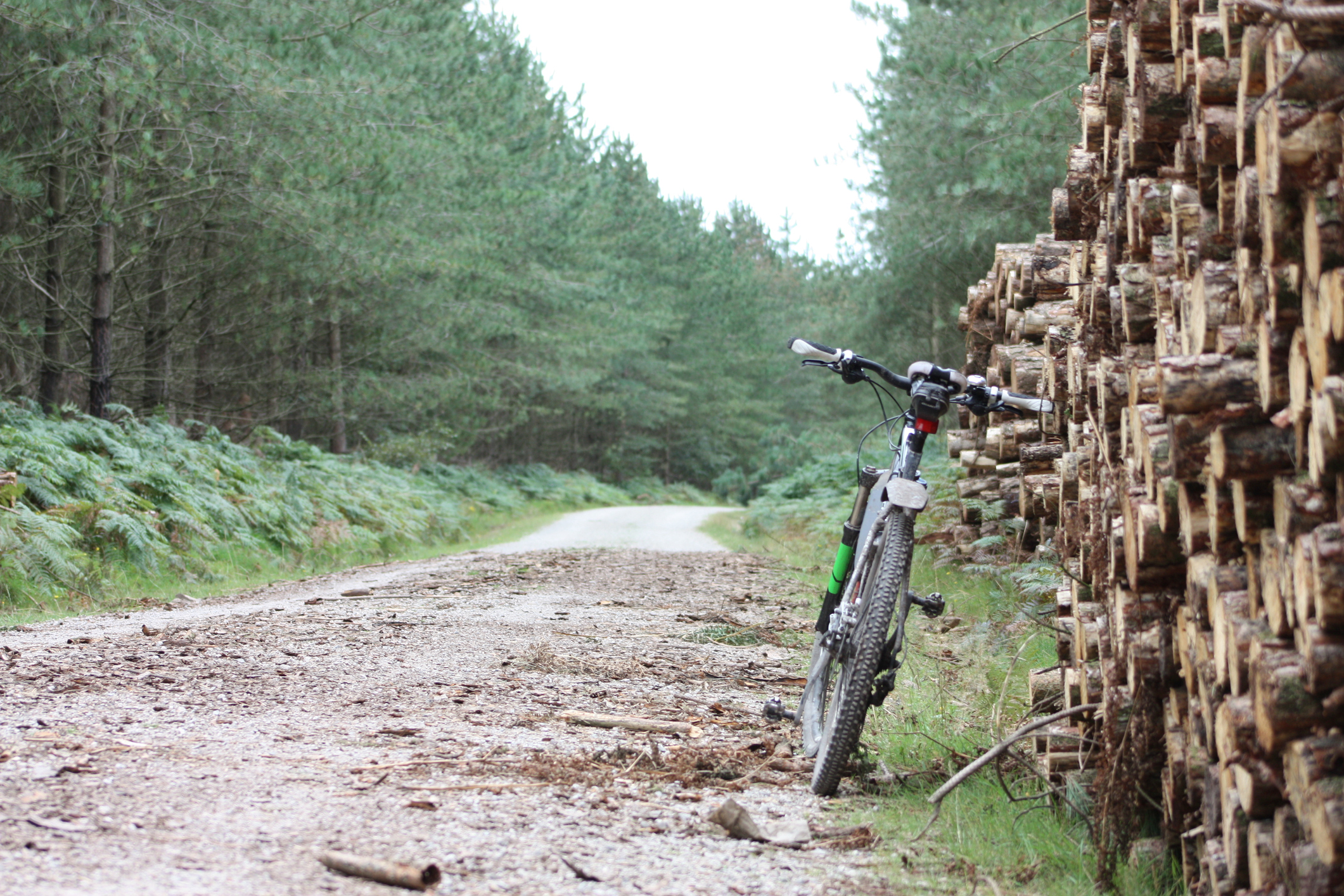 Mountain Bike With Sawn Wood Pile